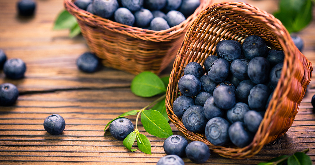 Blueberries: The Ultimate Superfood | Queensville